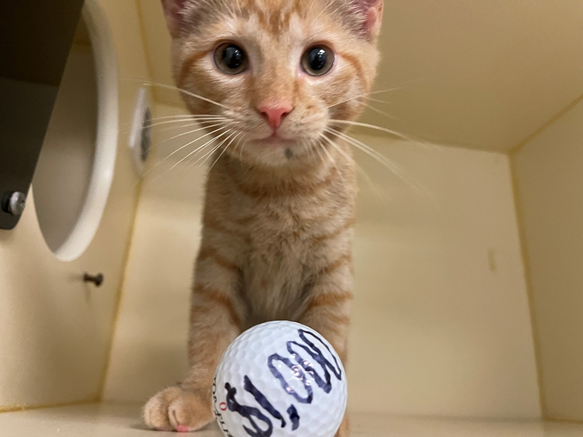 PAWS golf ball drop to benefit local dogs and cats for August 13th