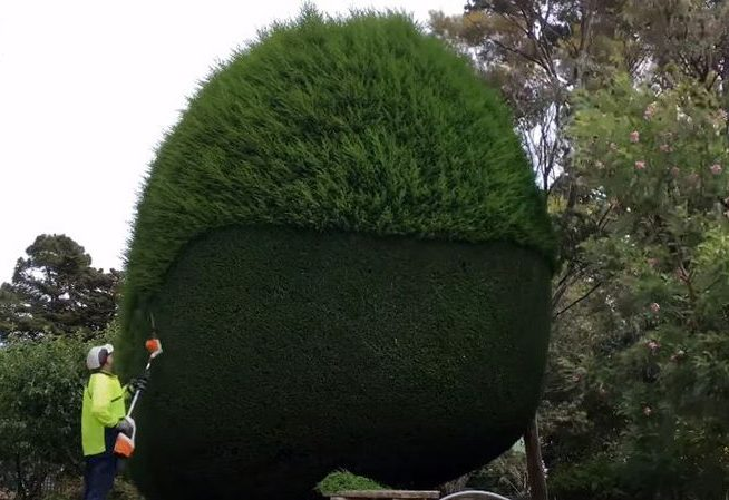 Golf course tree trimming by Genesis Tree Service